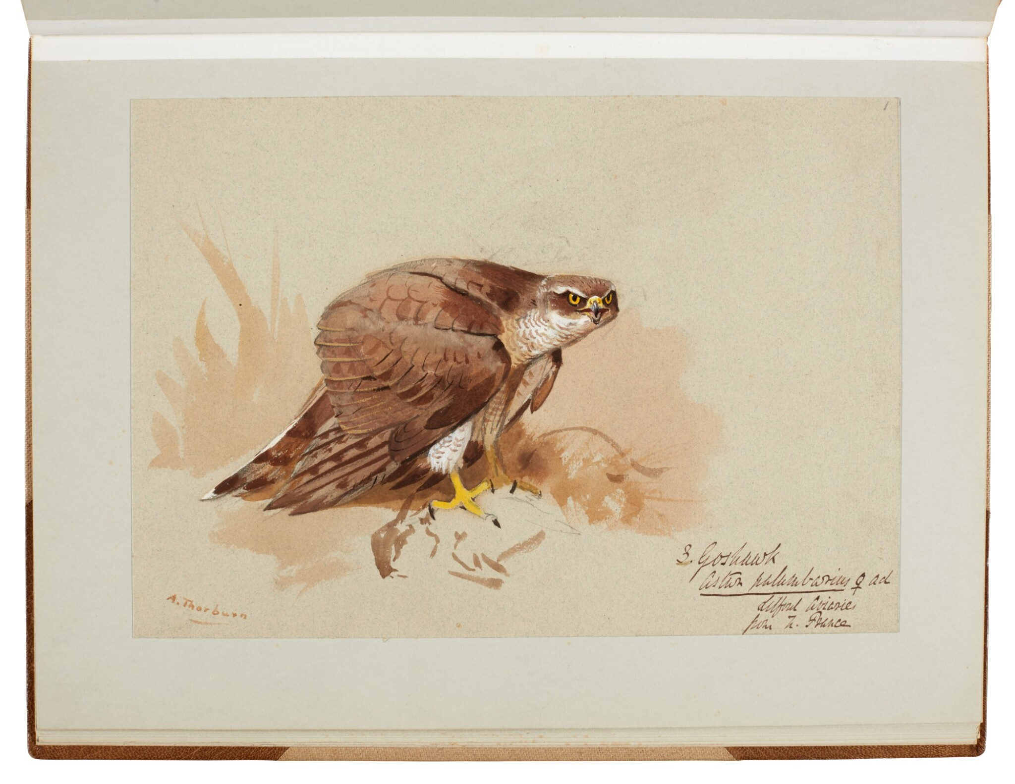 View full screen - View 1 of Lot 33. Archibald Thorburn | An album containing eight original drawings of birds of prey.