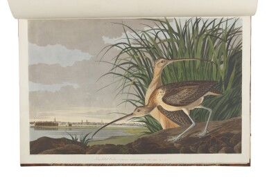 View 11. Thumbnail of Lot 250. JOHN JAMES AUDUBON | The Birds of America; from Original Drawings by John James Audubon. London: Published by the Author, 1827–1838.