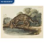 Ocelot, or Leopard-Cat. Male (Plate LXXXVI)