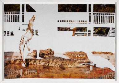View 2. Thumbnail of Lot 25. ANGUS FAIRHURST | CROCODILE WRESTLING (ALL EVIDENCE OF MAN REMOVED).