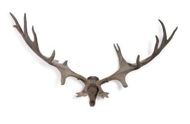 View 1. Thumbnail of Lot 1. A pair of fossilised 'Irish elk' antlers, Prehistoric.