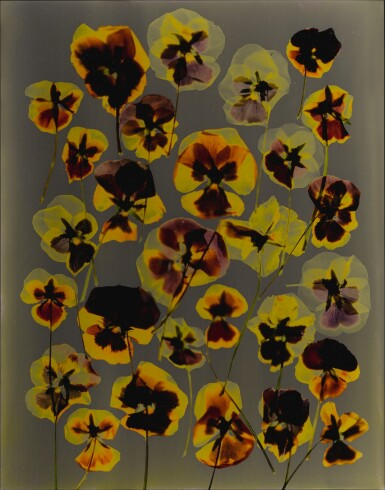 View 1. Thumbnail of Lot 8. ADAM FUSS | UNTITLED (PANSIES).