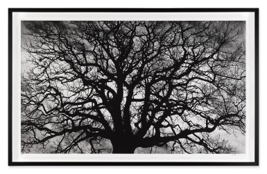 View 2. Thumbnail of Lot 102. Untitled (Tree).