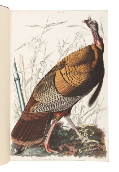 View 2. Thumbnail of Lot 250. JOHN JAMES AUDUBON | The Birds of America; from Original Drawings by John James Audubon. London: Published by the Author, 1827–1838.