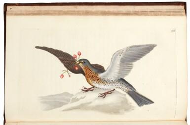 View 3. Thumbnail of Lot 7. Donovan | The Natural History of British Birds. London, 1799-1819, 10 volumes.
