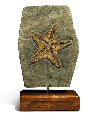 View 1. Thumbnail of Lot 85. A RARE STARFISH FOSSIL.