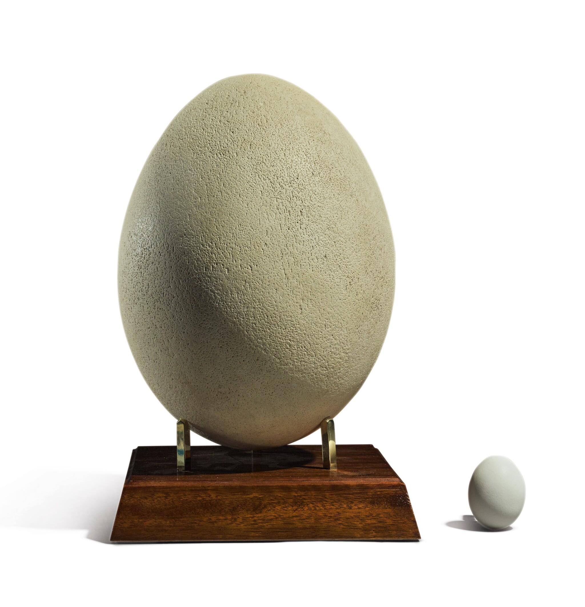 View full screen - View 1 of Lot 53. AN INTACT EGG OF THE AEPYORNIS MAXIMUS, OR ELEPHANT BIRD, PRE-17TH CENTURY.