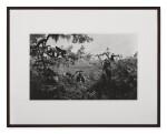 HIROSHI SUGIMOTO | WHITE MANTLED COLOBUS