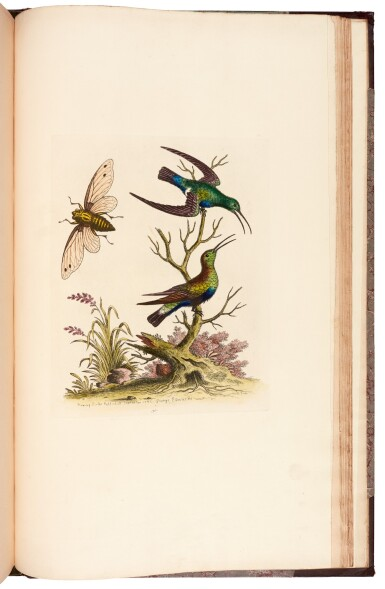 View 2. Thumbnail of Lot 28. EDWARDS   A natural history of birds [Gleanings of natural history], 1802–1806 (watermarks 1816–1824).