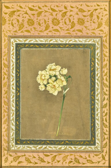 View 1. Thumbnail of Lot 60. A NARCISSUS, BY MUHAMMAD MASIH, PERSIA, SAFAVID, EARLY 18TH CENTURY.