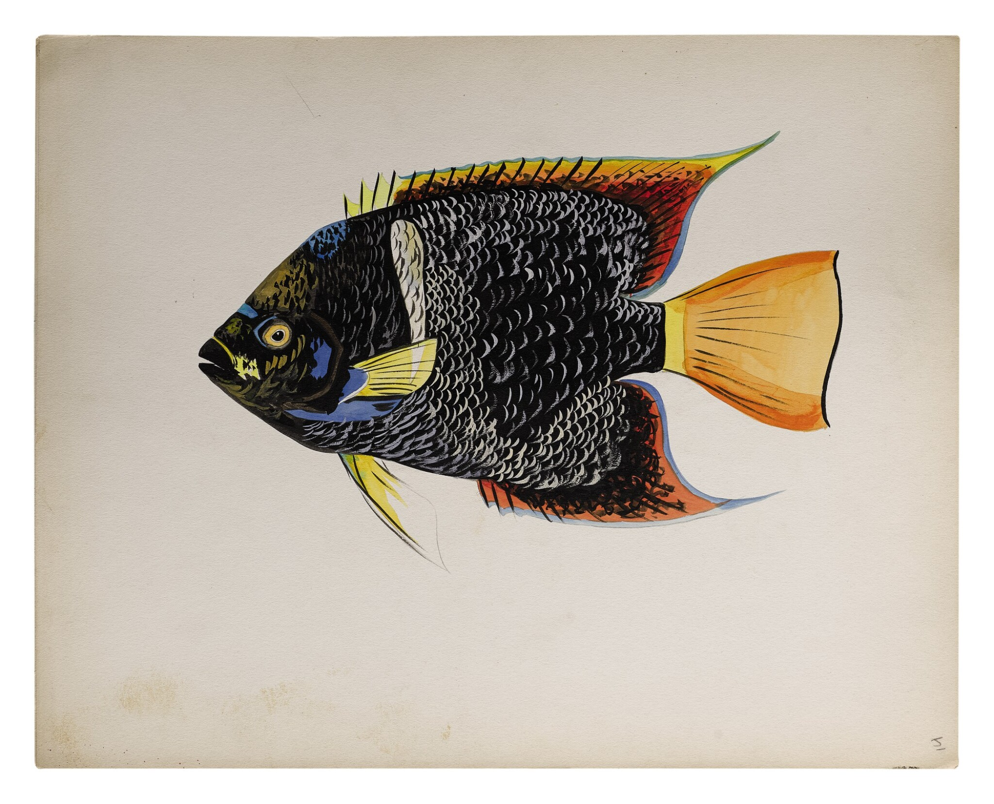 View full screen - View 1 of Lot 12. HOLOCANTHUS PASSER (KING ANGELFISH)   TRIGGERFISH.
