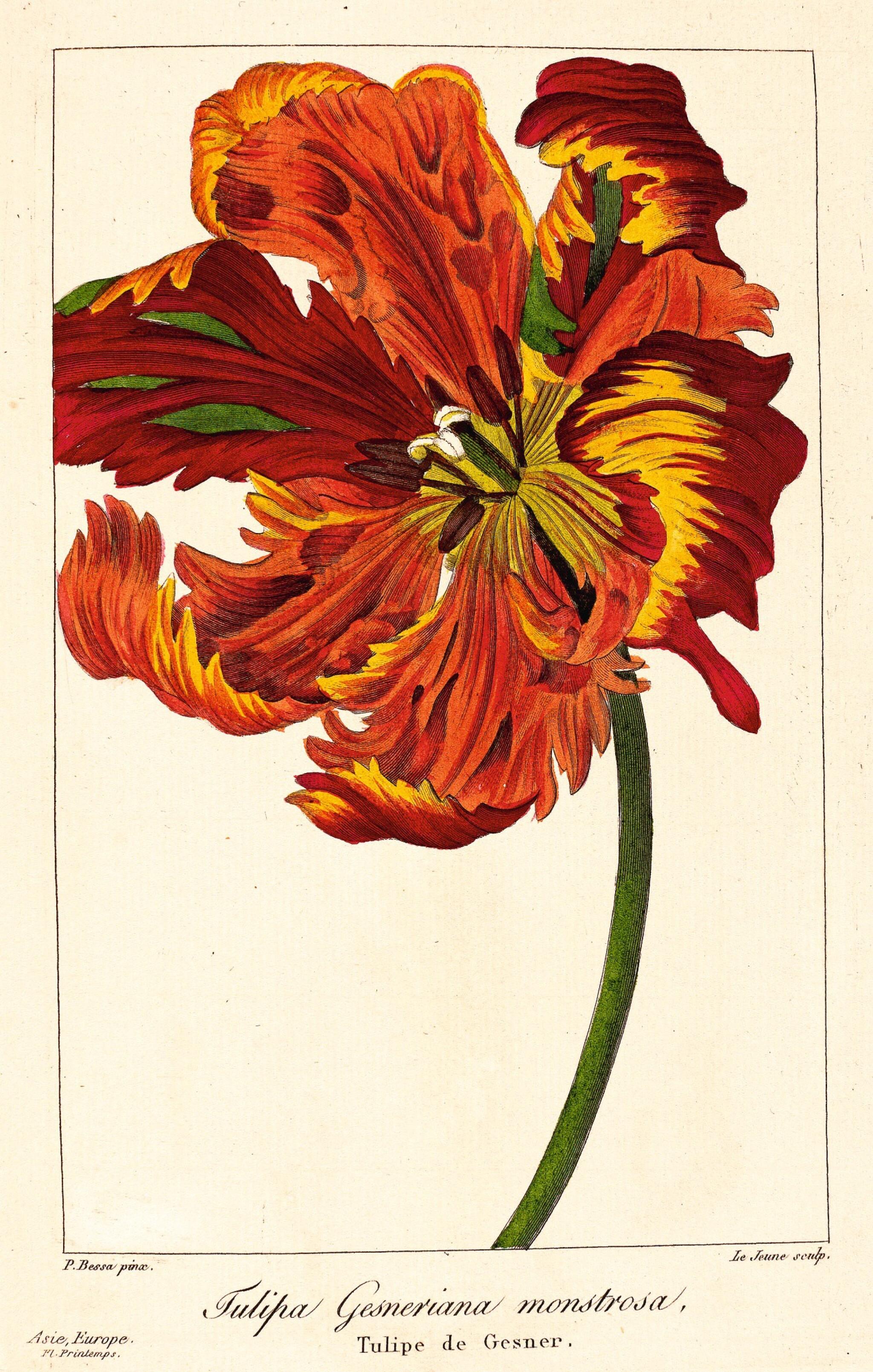View full screen - View 1 of Lot 345. Bessa. Flore des jardiniers, amateurs et manufacturiers. 1836. 2 volumes.