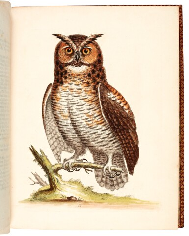 View 3. Thumbnail of Lot 74. Edwards | Natural history of birds [Gleanings], 1743-1764, 7 volumes.
