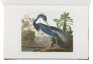 View 9. Thumbnail of Lot 250. JOHN JAMES AUDUBON | The Birds of America; from Original Drawings by John James Audubon. London: Published by the Author, 1827–1838.