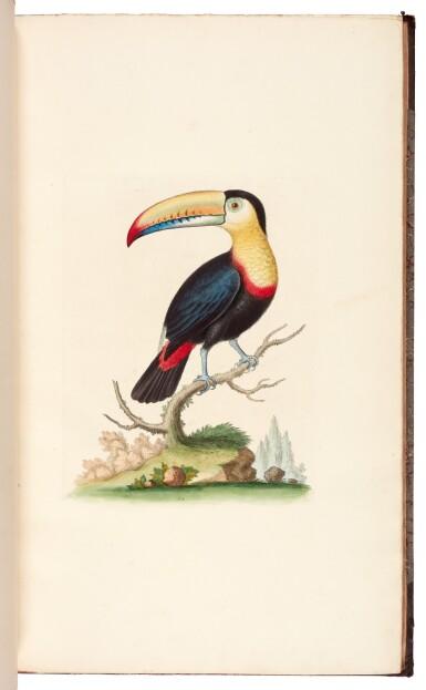 View 1. Thumbnail of Lot 28. EDWARDS   A natural history of birds [Gleanings of natural history], 1802–1806 (watermarks 1816–1824).