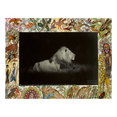 PETER BEARD   'LARGE-MANED LION AT COTTAR'S CAMP'