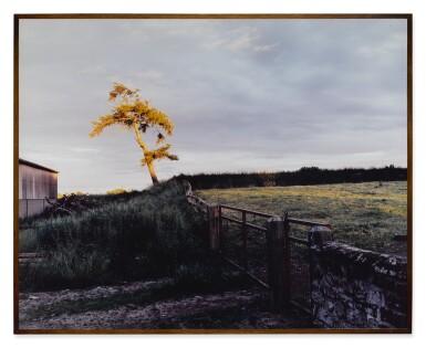 View 2. Thumbnail of Lot 58. SAM TAYLOR-JOHNSON | SELF PORTRAIT AS A TREE.