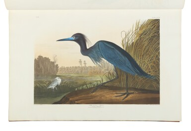 View 14. Thumbnail of Lot 250. JOHN JAMES AUDUBON | The Birds of America; from Original Drawings by John James Audubon. London: Published by the Author, 1827–1838.