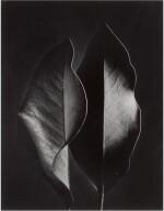 RUTH BERNHARD   'TWO LEAVES'