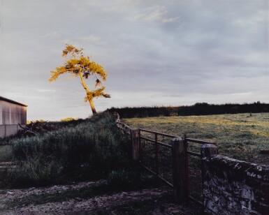 View 1. Thumbnail of Lot 58. SAM TAYLOR-JOHNSON | SELF PORTRAIT AS A TREE.