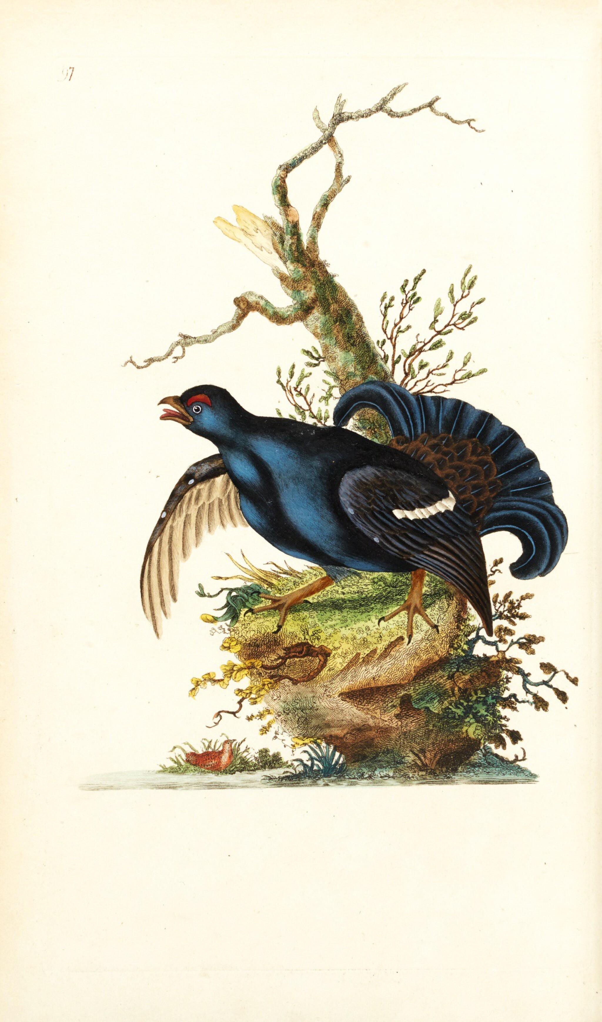 View full screen - View 1 of Lot 7. Donovan | The Natural History of British Birds. London, 1799-1819, 10 volumes.