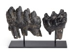 BRACE OF GOMPHOTHERE MOLARS