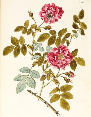 View 3. Thumbnail of Lot 21. Jacquin   Plantarum rariorum Horti Caesarei Schönbrunnensis descriptiones et icones. 1797–1804, 4 volumes.