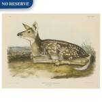Common American Deer. Fawn. (Plate LXXXI)