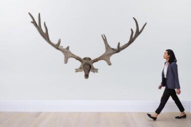 View 7. Thumbnail of Lot 1. A pair of fossilised 'Irish elk' antlers, Prehistoric.