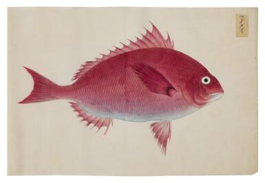 View 12. Thumbnail of Lot 118. ATTRIBUTED TO KAWAHARA KEIGA (1786–1860) STUDIO, EDO PERIOD, 19TH CENTURY, A GROUP OF TWENTY-FOUR FISH.