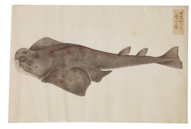 View 5. Thumbnail of Lot 118. ATTRIBUTED TO KAWAHARA KEIGA (1786–1860) STUDIO, EDO PERIOD, 19TH CENTURY, A GROUP OF TWENTY-FOUR FISH.
