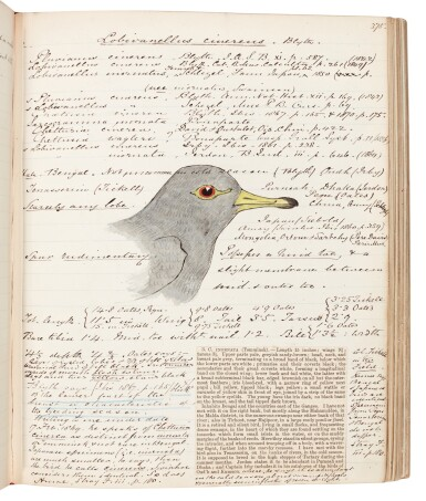 View 2. Thumbnail of Lot 22. James Edmund Harting | Archive of ornithological papers, correspondence, and other items, 19th-20th century.