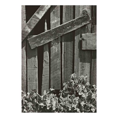 View 1. Thumbnail of Lot 95. 'Boards and Thistles'.