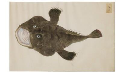 View 11. Thumbnail of Lot 118. ATTRIBUTED TO KAWAHARA KEIGA (1786–1860) STUDIO, EDO PERIOD, 19TH CENTURY, A GROUP OF TWENTY-FOUR FISH.