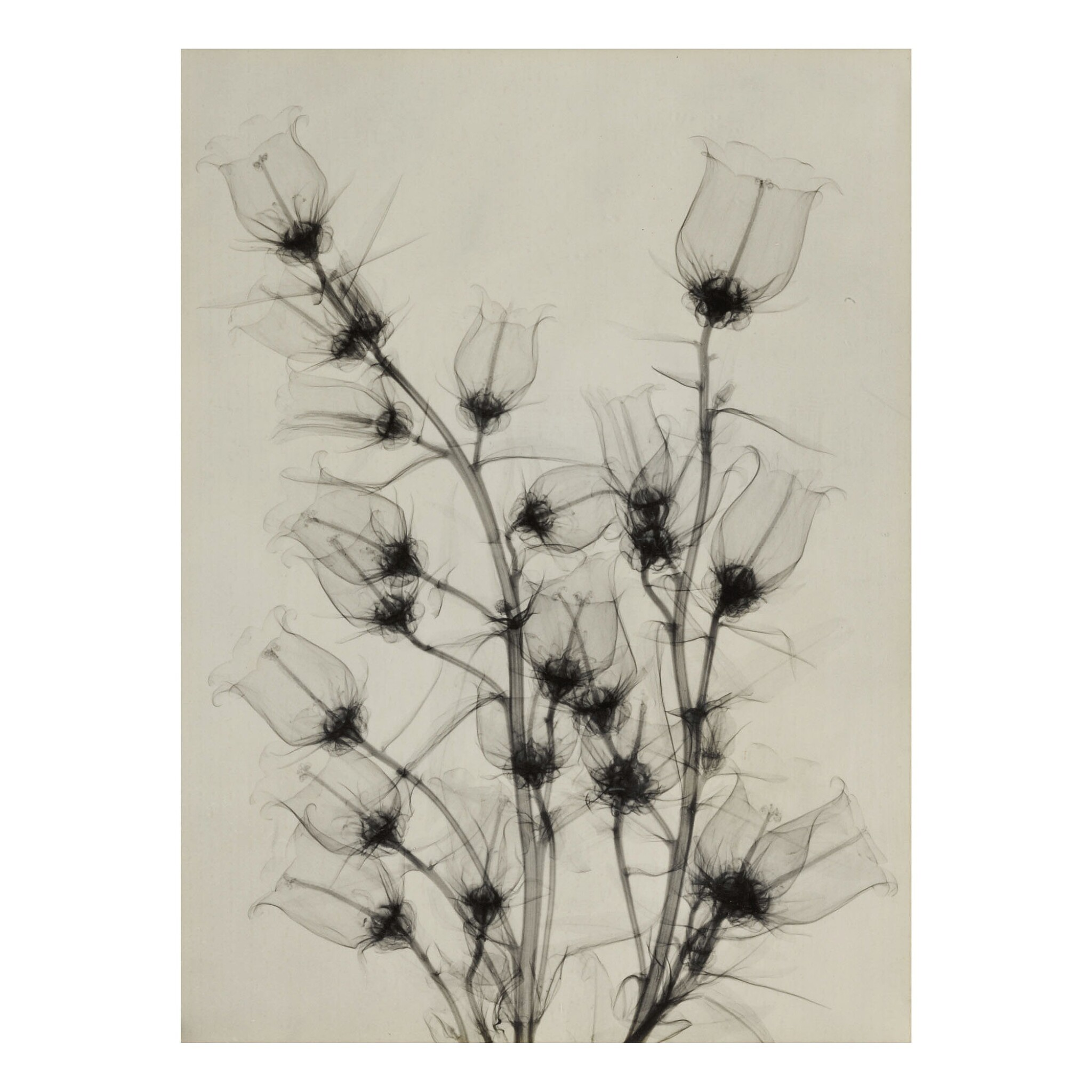 View full screen - View 1 of Lot 18. DR. DAIN L. TASKER   'CANTERBURY BELLS FROM BETTY'S GARDEN'.