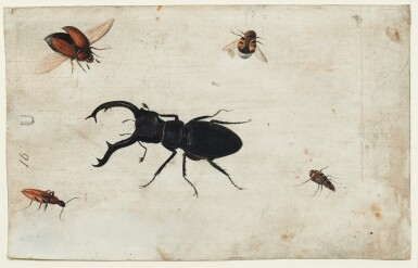 View 3. Thumbnail of Lot 132. GERMAN SCHOOL, CIRCA 1600    A PAIR OF STUDIES OF A BEETLE AND OTHER INSECTS.