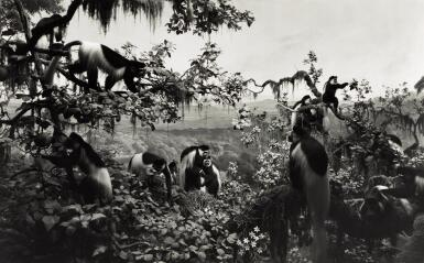 HIROSHI SUGIMOTO | 'WHITE MANTLED COLOBUS' (FROM THE SERIES DIORAMAS), 1982
