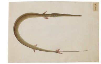 View 18. Thumbnail of Lot 118. ATTRIBUTED TO KAWAHARA KEIGA (1786–1860) STUDIO, EDO PERIOD, 19TH CENTURY, A GROUP OF TWENTY-FOUR FISH.
