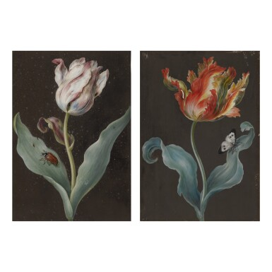 View 1. Thumbnail of Lot 135.  ATTRIBUTED TO BARBARA REGINA DIETZSCH |  A PURPLE TULIP WITH A BEETLE AND AN ORANGE TULIP WITH A BUTTERFLY: A PAIR OF BOTANICAL STUDIES.