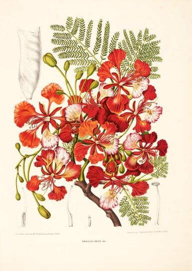 Hoola van Nooten   Fleurs, fruits et feuillages choisies... de l'Ile de Java, [c.1866]