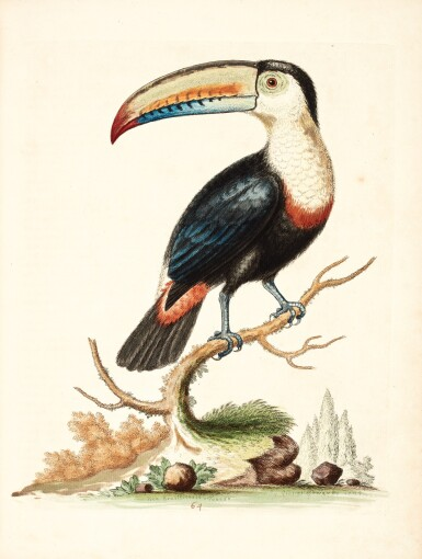 View 2. Thumbnail of Lot 74. Edwards | Natural history of birds [Gleanings], 1743-1764, 7 volumes.