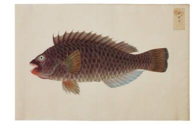 View 13. Thumbnail of Lot 118. ATTRIBUTED TO KAWAHARA KEIGA (1786–1860) STUDIO, EDO PERIOD, 19TH CENTURY, A GROUP OF TWENTY-FOUR FISH.