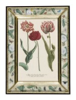 A SET OF SIXTEEN GERMAN HAND-COLOURED ENGRAVINGS OF TULIPS BY JOHANN WILHELM WEINMANN (1683-1741) FROM PHYTANTHOZA ICONOGRAPHIA, REGENSBURG, CIRCA 1740