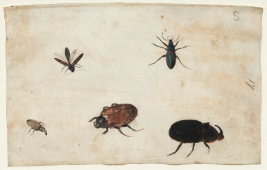 View 6. Thumbnail of Lot 132. GERMAN SCHOOL, CIRCA 1600    A PAIR OF STUDIES OF A BEETLE AND OTHER INSECTS.