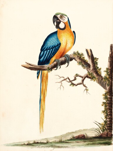 Hayes | Portraits of rare and curious birds, with their descriptions, from the menagery of Osterley Park, 1794