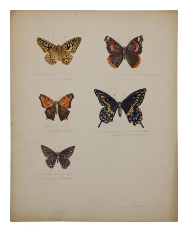 GREAT SPANGLED FRITILLARY, RED ADMIRAL, GRAY COMMA, NEWFOUNDLAND SWALLOWTAIL, BALTIMORE CHECKER-SPOT