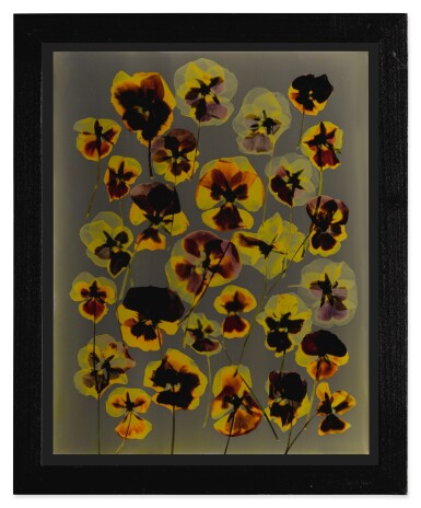 View 2. Thumbnail of Lot 8. ADAM FUSS | UNTITLED (PANSIES).