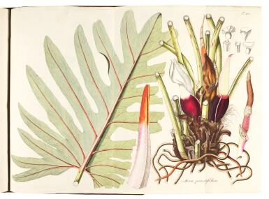 View 5. Thumbnail of Lot 21. Jacquin   Plantarum rariorum Horti Caesarei Schönbrunnensis descriptiones et icones. 1797–1804, 4 volumes.