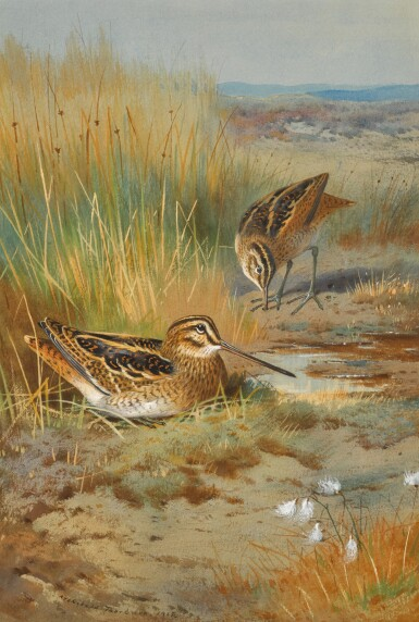 View 1. Thumbnail of Lot 140. A Pair of Snipe (Gallinago Gallinago) .