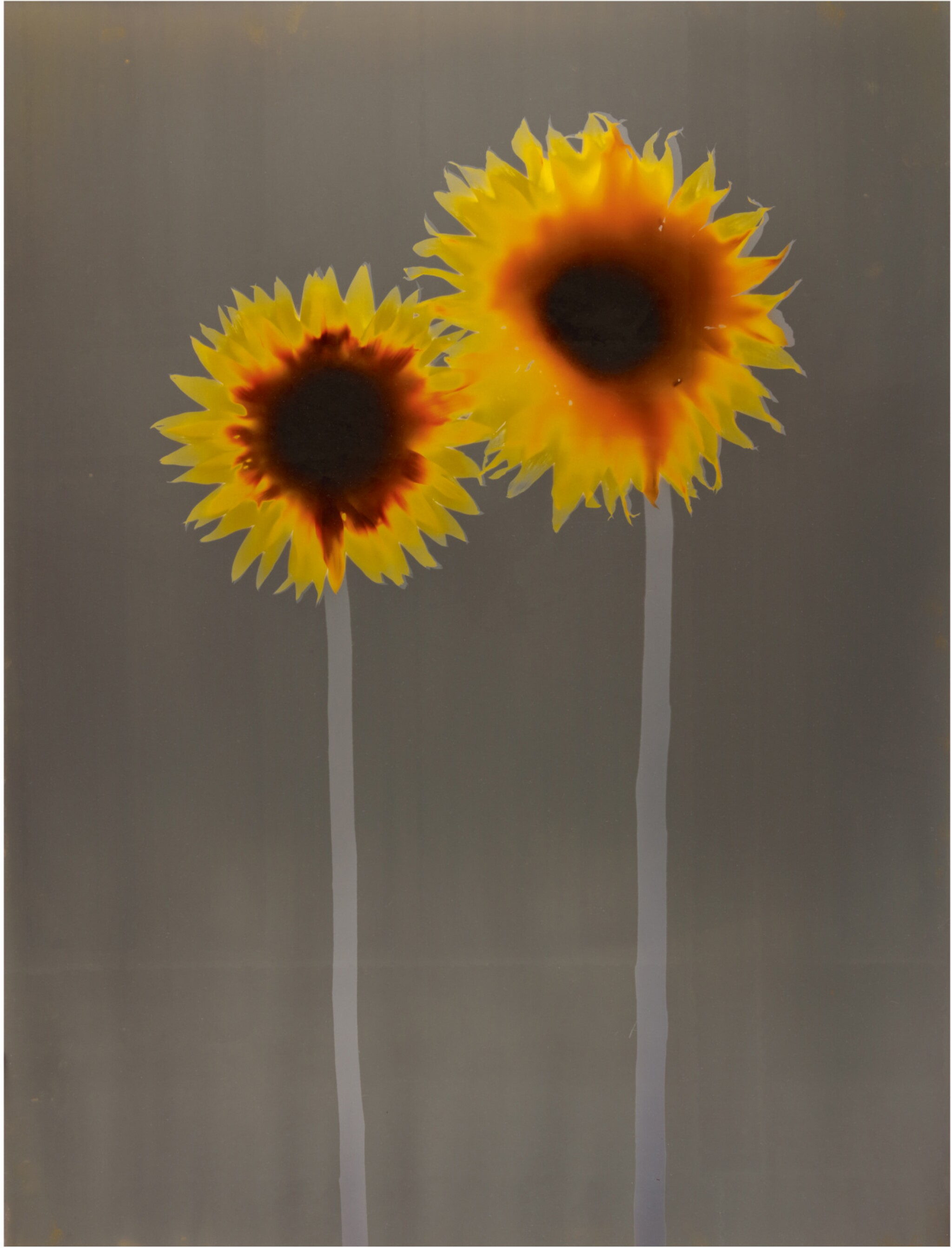View full screen - View 1 of Lot 10. ADAM FUSS | UNTITLED (SUNFLOWERS).